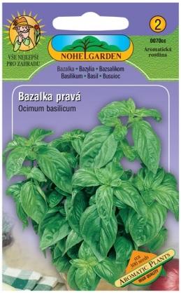 Bazalka pravá zelená